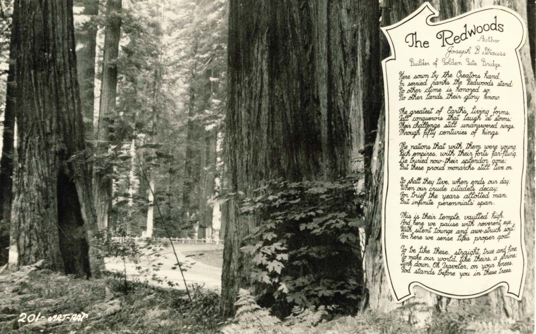 The Redwoods postcard 1950s