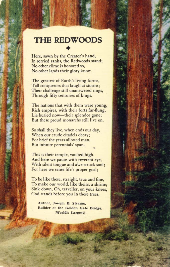 The Redwoods postcard 1960s