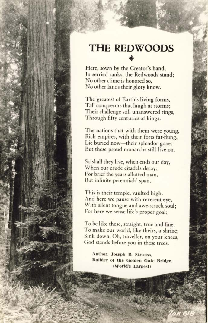 The Redwoods postcard 1932