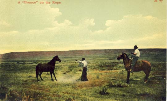 A bronco on the rope, postcard 1900s