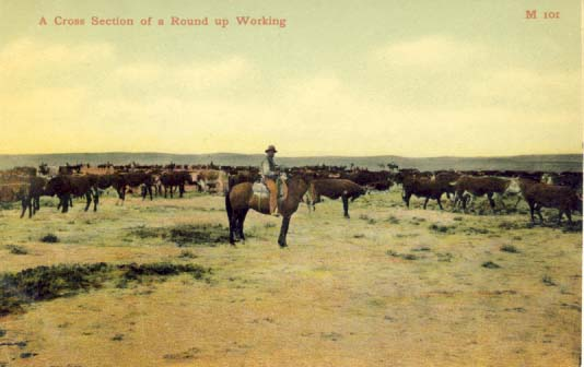 A cross section of a round up working, postcard 1900s