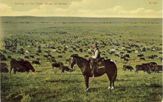 Grazing on the cattle range at sunset, postcard 1906