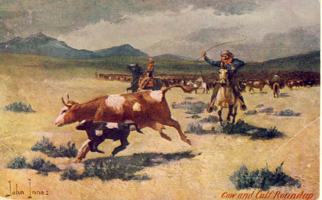 Cowboy and calf roundup, postcard