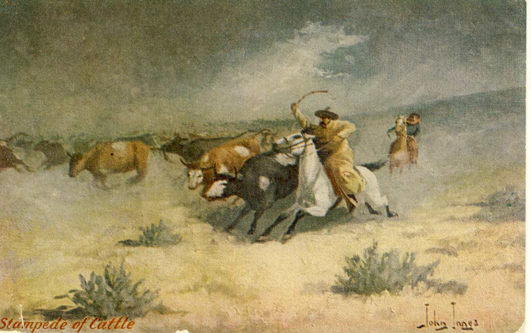 Stampede of cattle postcard