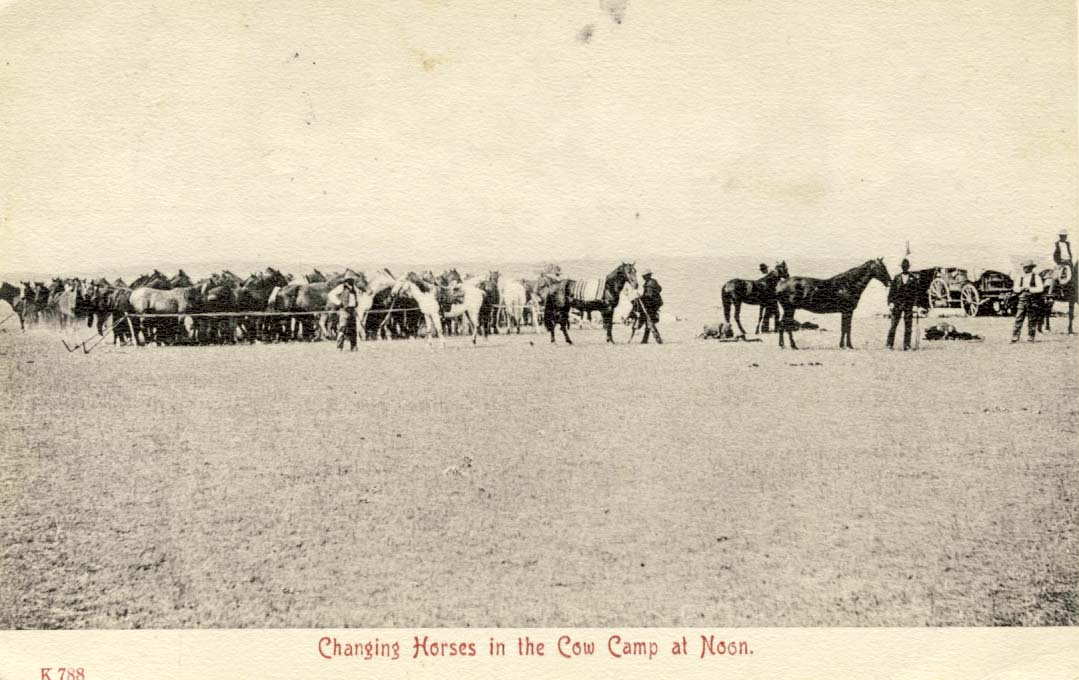 Changing horses in the cow-camp at noon, postcard 1908