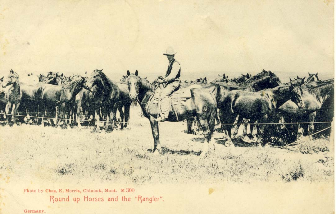 Round up horses and the 'rangler', postcard 1906