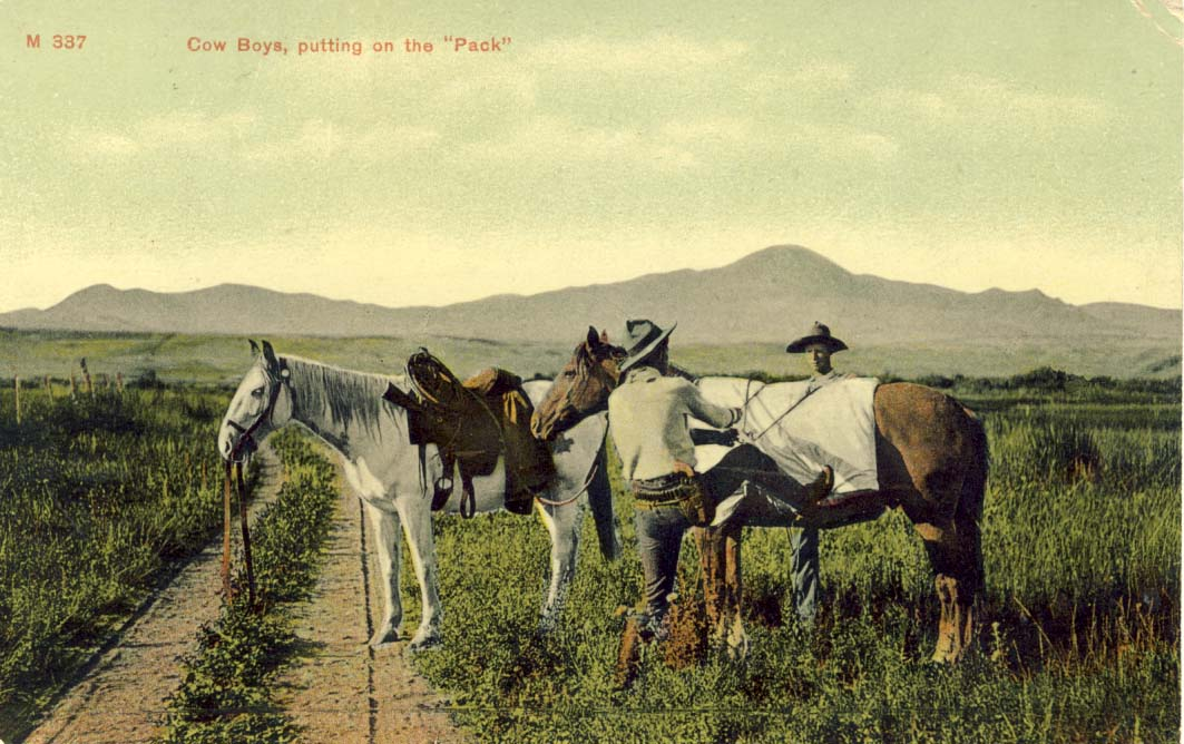 Cow boys, putting on the 'pack', postcard 1909