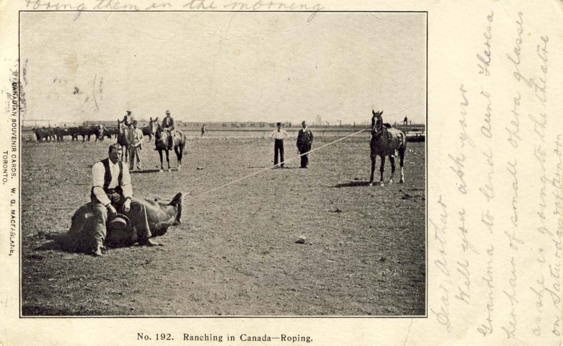 Ranching in Canada - roping postcard