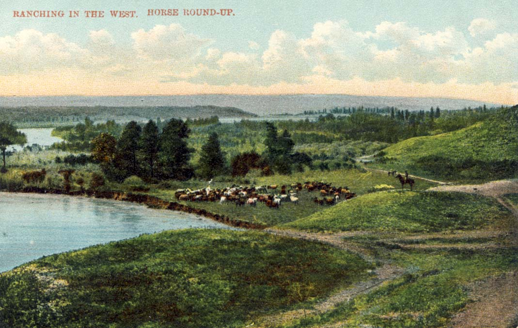 Ranching in Canada. Horse round-up postcard