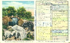 Believe me, these are the bare (bear) facts. Postcard, 1930s.