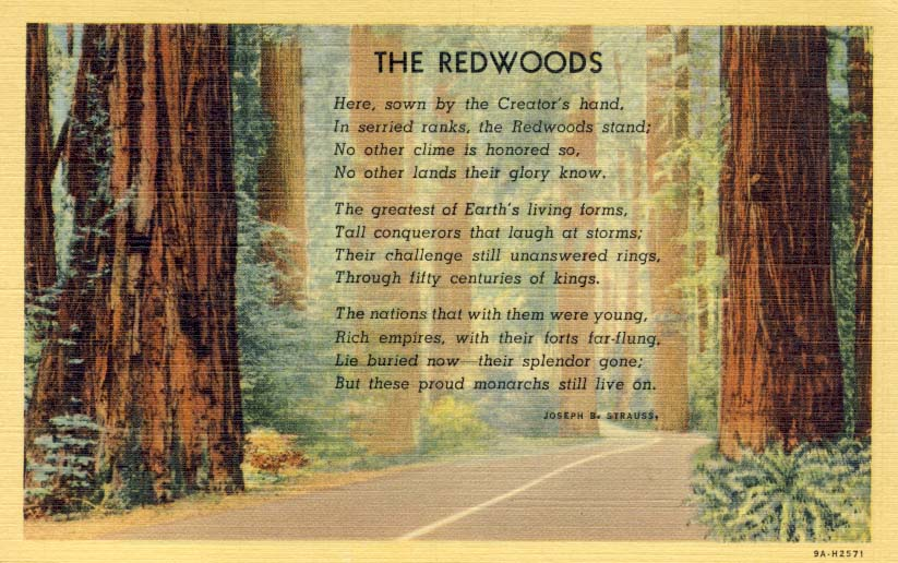 The Redwoods postcard 1939